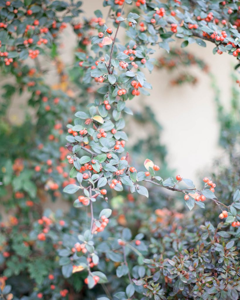 Relaxed Country Wedding berries