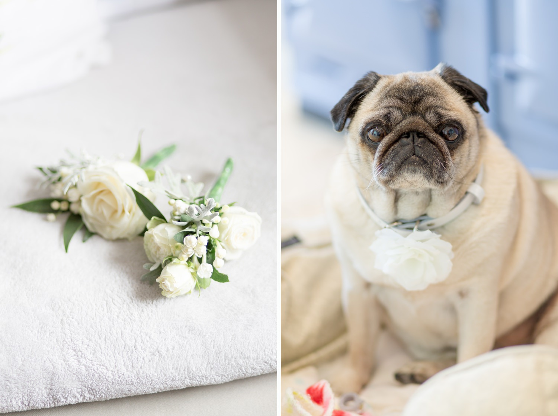 Emily & Jonathan's Cambridgeshire wedding - a pug wears a floral collar